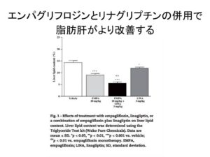 リナグリプチンとエンパグリフロジンの併用で脂肪肝が改善する