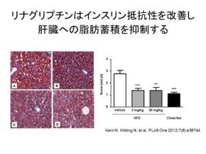 リナグリプチンによる肝保護の可能性